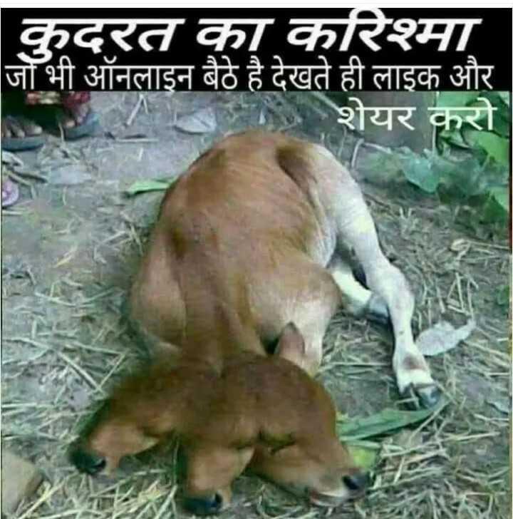 🐏अंतर्राष्ट्रीय पशु अधिकार दिवस - कुदरत का करिश्मा जो भी ऑनलाइन बैठे है देखते ही लाइक और | शेयर करो - ShareChat