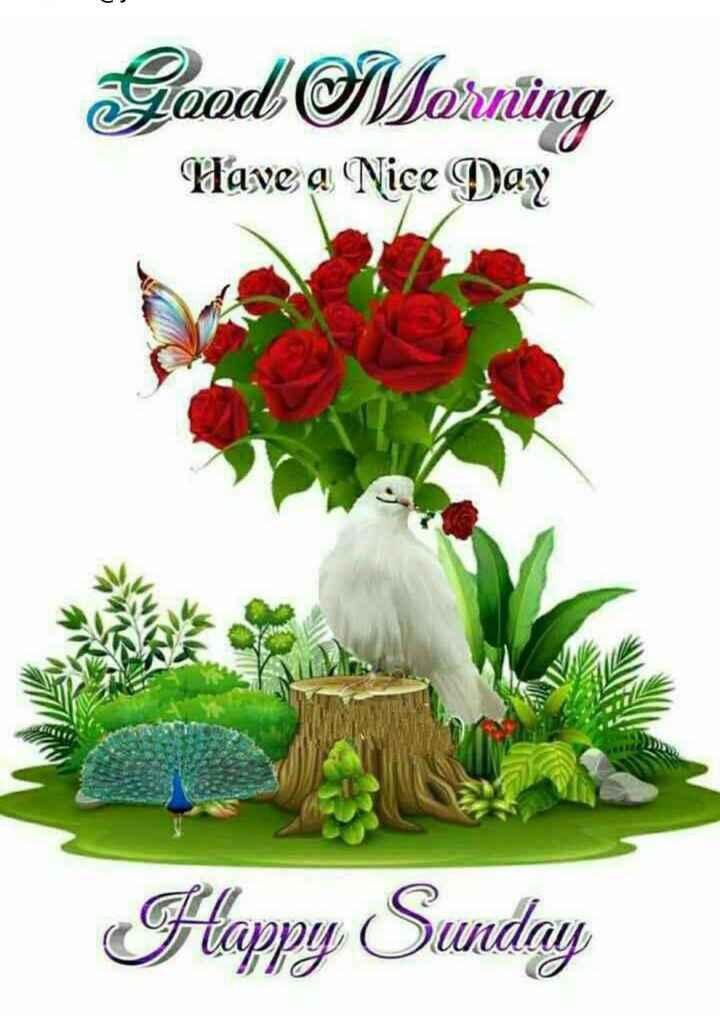 🖼 आर्ट और पेंटिंग्स - Good Mornung Have a Nice Day Happy Sunday - ShareChat