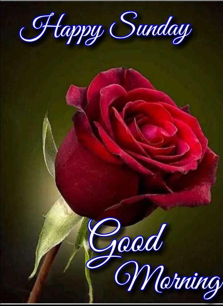💐इतर शुभेच्छा - Happy Sunday Good Morning - ShareChat