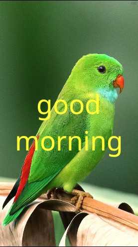 📸इमेज स्टेटस - good morning - ShareChat