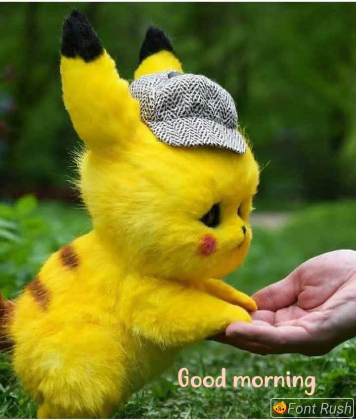 🐢 एनिमल फोटोग्राफर - Good morning Font Rush - ShareChat