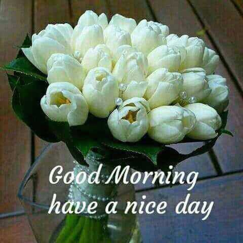 👶👦क्यूट बच्चे - Good Morning have a nice day - ShareChat