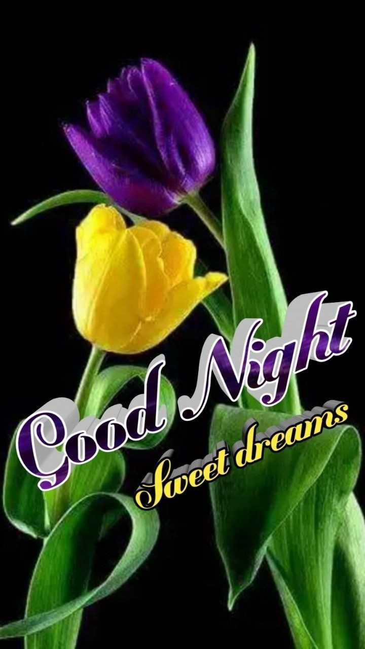 🌙 गुड नाईट - Condo Nina Sweet dreams - ShareChat