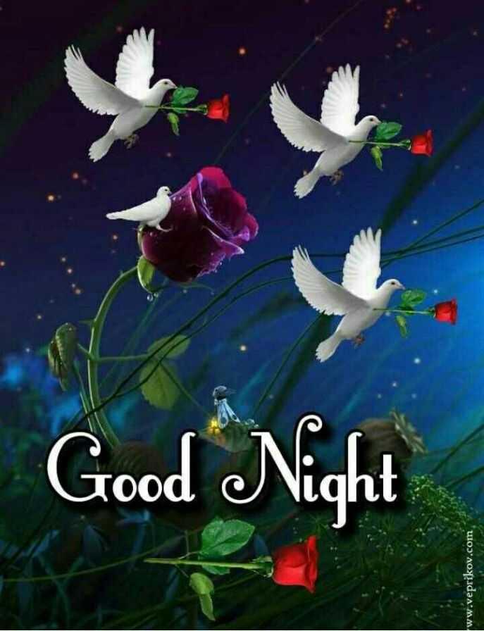 🌙 गुड नाईट - Good Night ww . veprikov . com - ShareChat