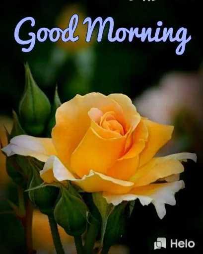 गुड मॉर्निंग - Good Morning - ShareChat