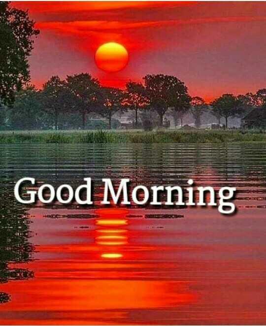 🌳नेचर फोटोग्राफर - Good Morning - ShareChat