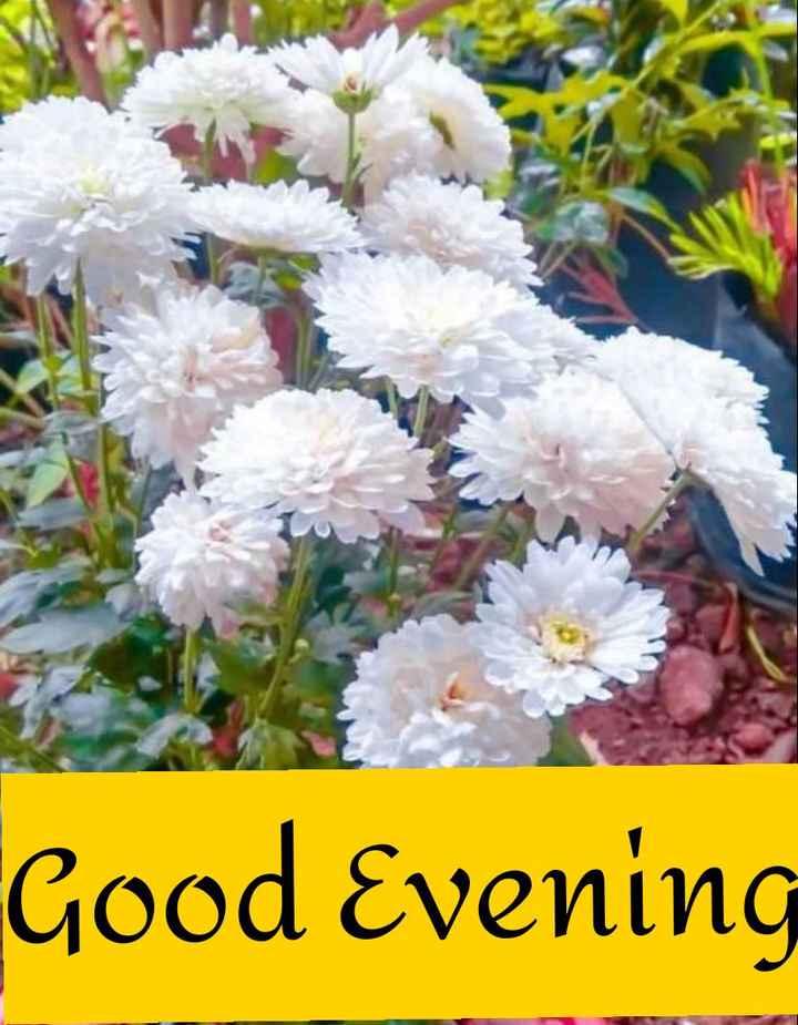 🌳 नेचर फोटोग्राफर - Good Evening - ShareChat