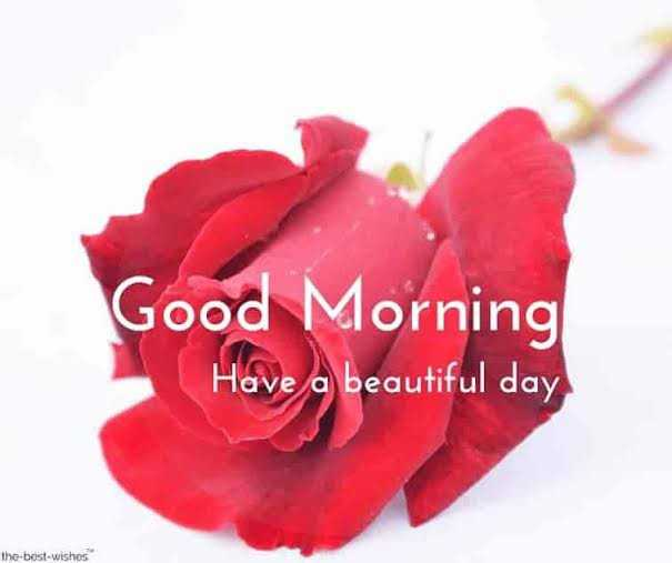 🇮🇳 पश्चिम बंगाल में पीएम मोदी - Good Morning Have a beautiful day the - best - wishes - ShareChat