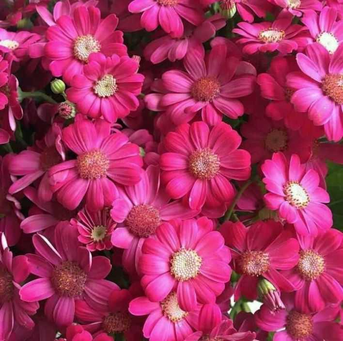 #फूल - ShareChat