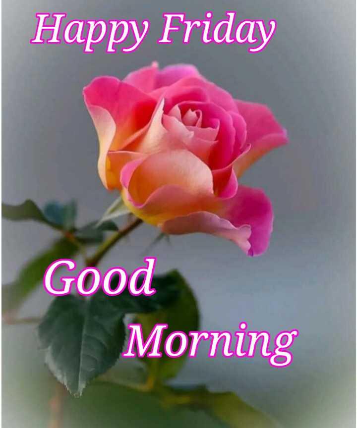 💐 फ्लावर फोटोग्राफी - Happy Friday Good Morning - ShareChat