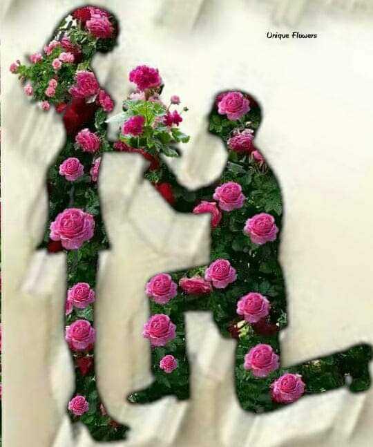 💐 फ्लावर फोटोग्राफी - Onique Flowers - ShareChat