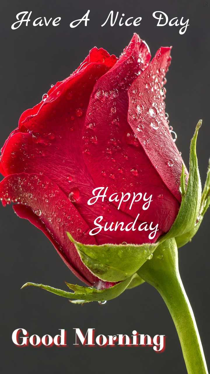 💐 फ्लावर फोटोग्राफी - | Have A Nice Day Happy Sunday Good Morning - ShareChat