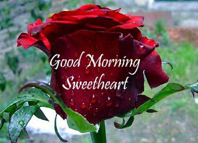 💐 फ्लावर फोटोग्राफी - Good Morning Sweetheart - ShareChat