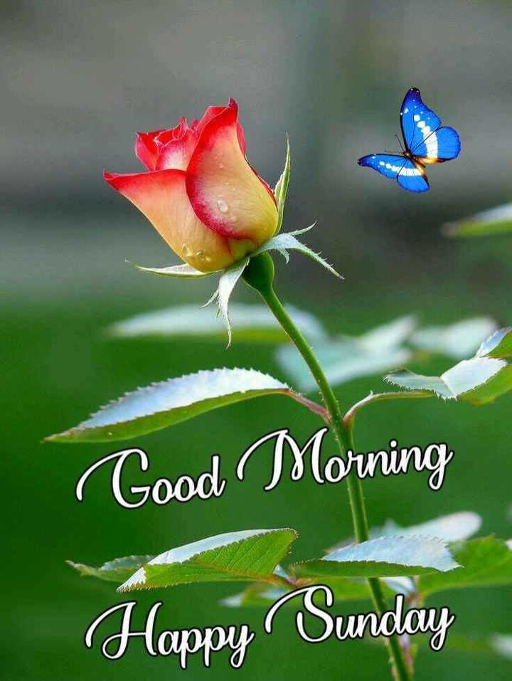 💐 फ्लावर फोटोग्राफी - Good Morning Happy Sunday - ShareChat