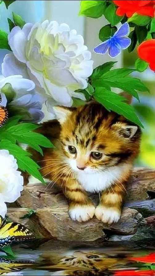 🐈मनी म्याऊ/प्राणी प्रेम - ShareChat