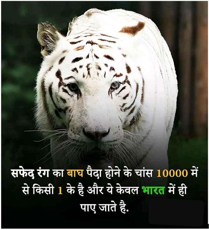 महत्वपूर्ण जानकारी - सफेद रंग का बाघ पैदा होने के चांस 10000 में से किसी 1 के है और ये केवल भारत में ही पाए जाते है . - ShareChat