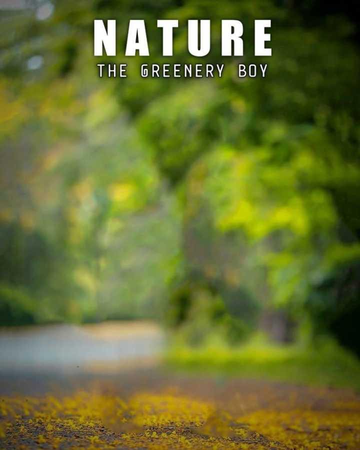 📸माझी फोटोग्राफी - NATURE THE GREENERY BOY - ShareChat