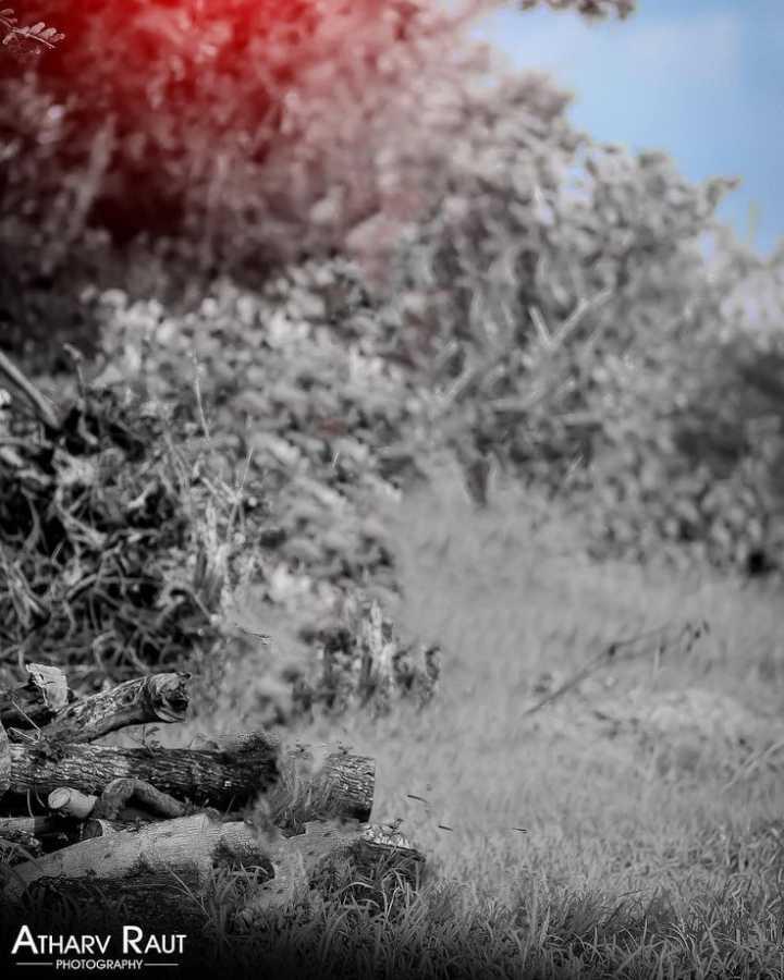 📸माझी फोटोग्राफी - ATHARV RAUT - PHOTOGRAPHY — - ShareChat