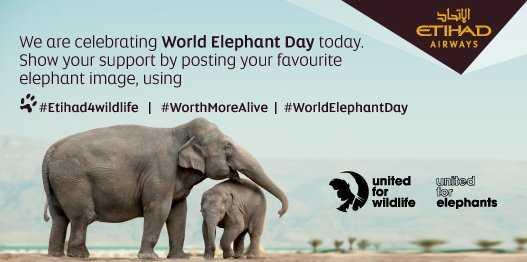 🐘 विश्व हाथी दिवस - الإتحاد ETIHAD We are celebrating World Elephant Day today . AIRWAYS Show your support by posting your favourite elephant image , using # Etihad4wildlife # WorthMoreAlive # WorldElephantDay united wildlife unted elephants - ShareChat