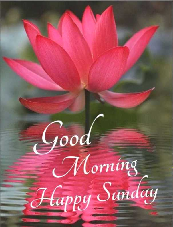 🌄 वॉलपेपर - Good Morning Happy Sunday - ShareChat