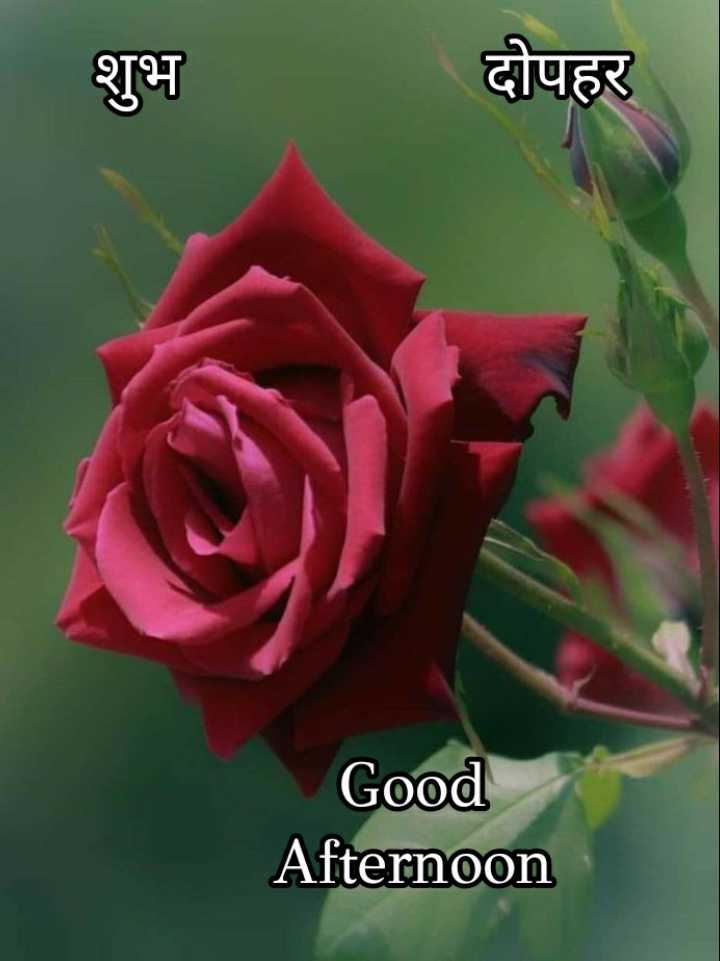 🕛 शुभ दोपहर☺ - शुभ दोपहर Good Afternoon - ShareChat