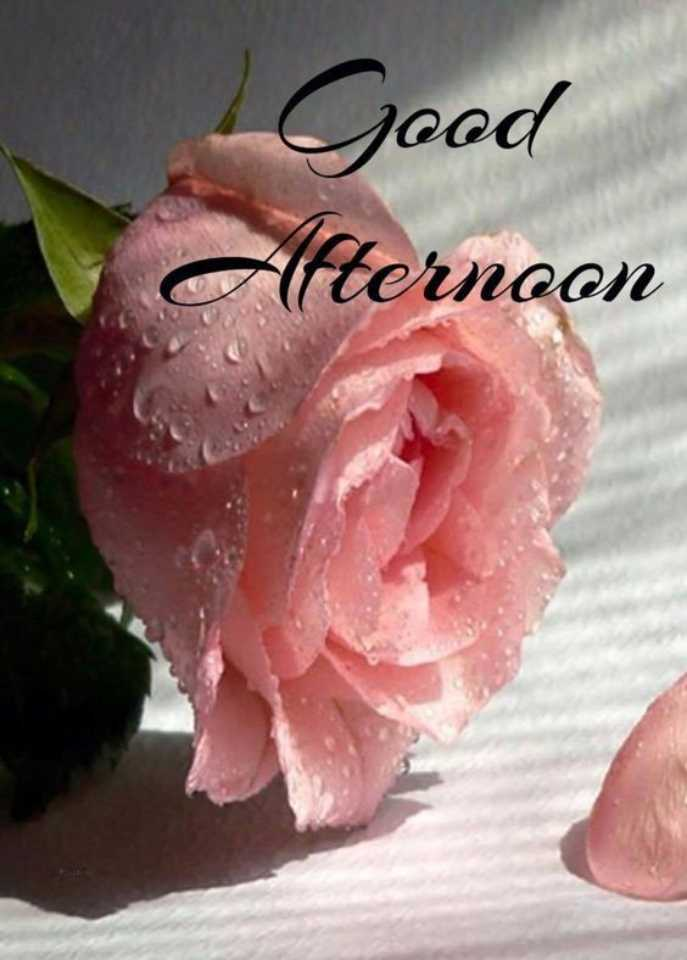 🕛 शुभ दोपहर☺ - Good ( ternoon Afters - ShareChat