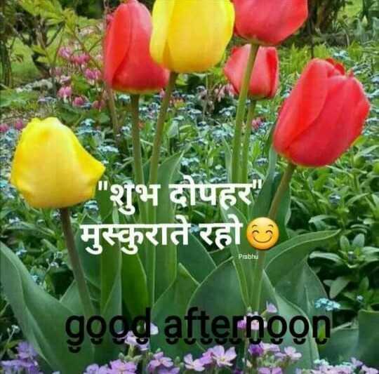 🕛 शुभ दोपहर☺ - शुभ दोपहर मुस्कुराते रहो Prabhu goog afterooon - ShareChat