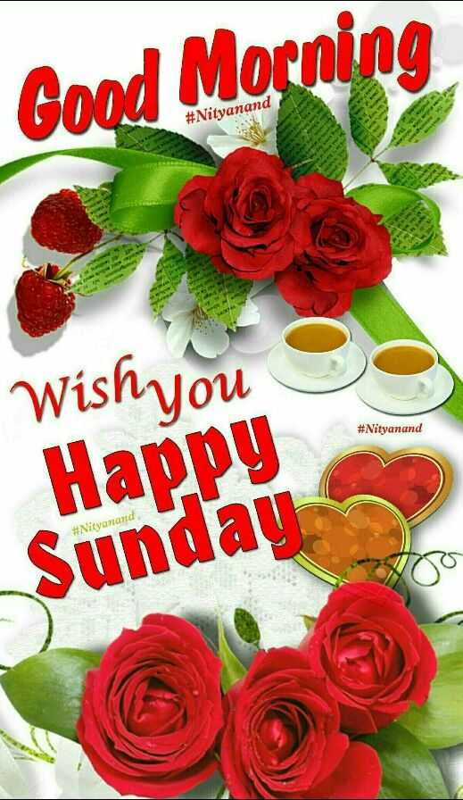 🌷शुभ रविवार - Good Morning # Nityanand Wish you # Nityanand Happy Sunday # Nityanand - ShareChat