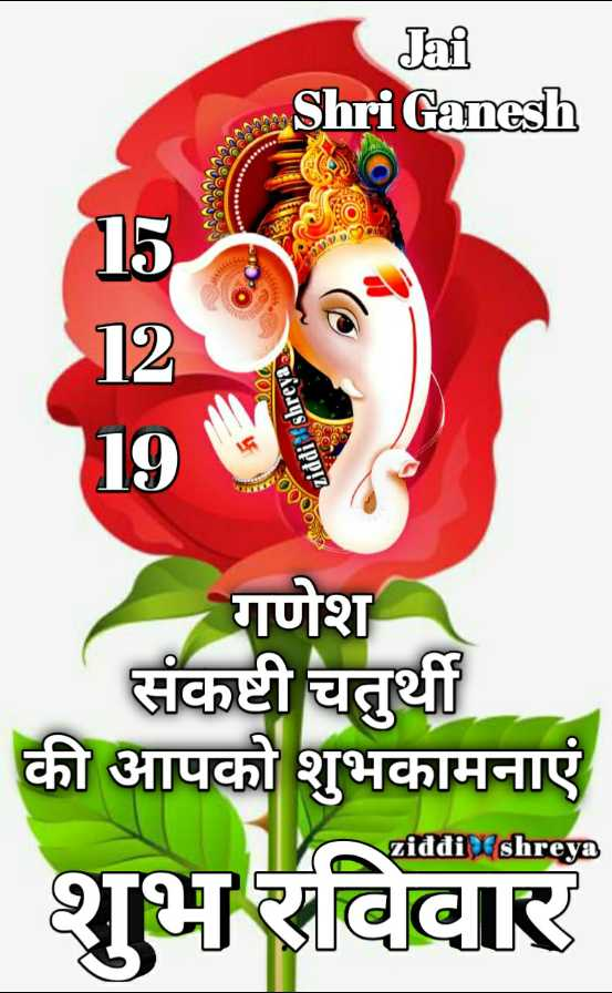 🌷शुभ रविवार - Jai Shri Ganesh 200 ziddi shreya a OF 19 गणेश संकष्टी चतुर्थी की आपको शुभकामनाएं \ ziddi shreya शुभ रविवार - ShareChat