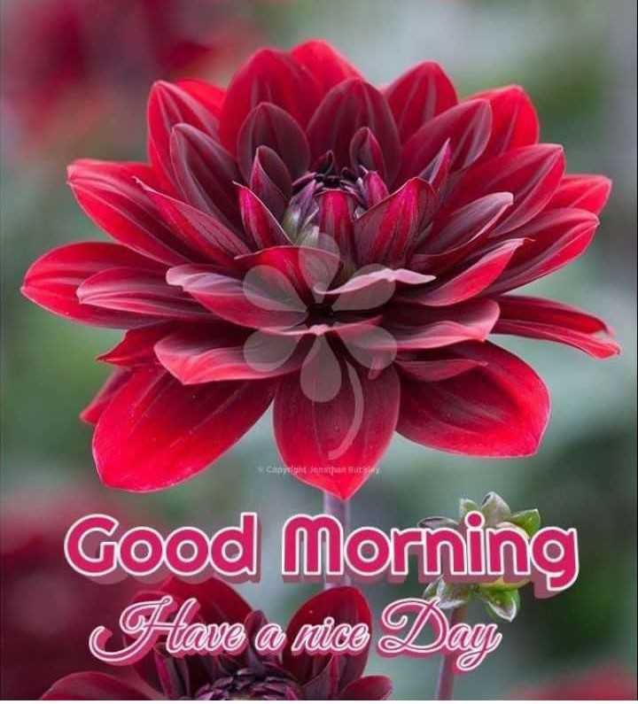 🌷शुभ रविवार - ght constantly Good Morning Have a nitas Dag - ShareChat