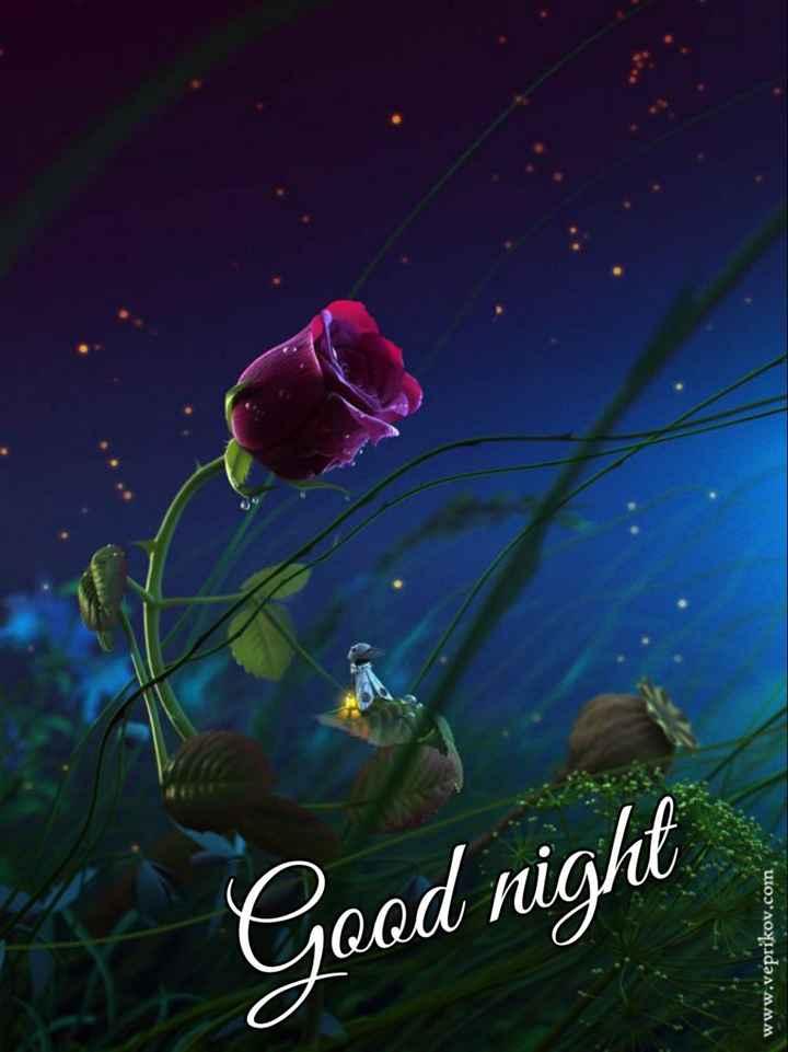 😴शुभ रात्री😴 - Good night www . veprikov . com - ShareChat