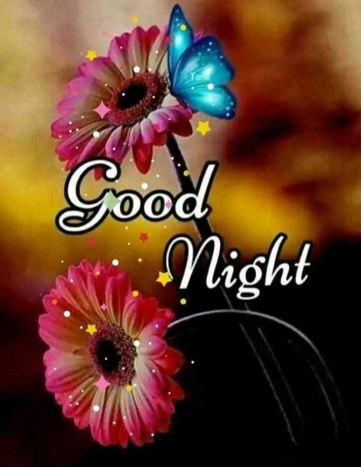 😴शुभ रात्री😴 - Tood N : Night - ShareChat