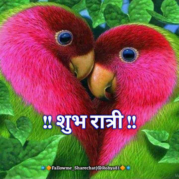 😴शुभ रात्री😴 - शुभ रात्री ! * Fallowme _ Sharechat | Rohya81 - ShareChat