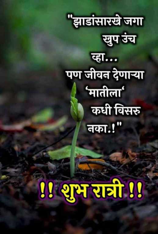 😴शुभ रात्री😴 - झाडांसारखे जगा खुप उंच व्हा . . . पण जीवन देणाऱ्या ' मातीला कधी विसरु नका . ! ! ! शुभ रात्री ! ! - ShareChat