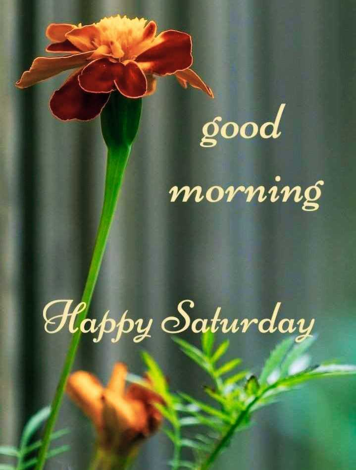 🌷शुभ शनिवार - good morning Happy Saturday - ShareChat