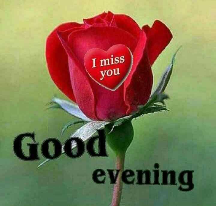🌜 शुभ संध्या🙏 - I miss you Good evening - ShareChat