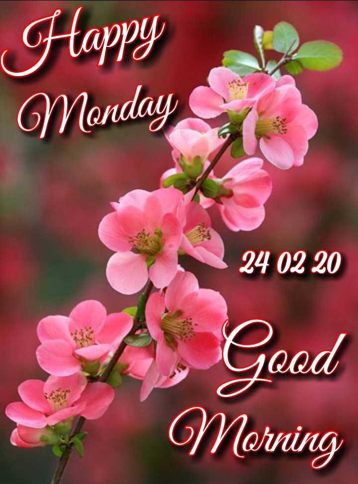 🌷शुभ सोमवार - Happy Monday · 24 02 20 Good Morning - ShareChat