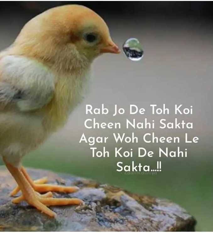 शेयरचैट हटके प्रोफ़ाइल - Rab Jo De Toh Koi Cheen Nahi Sakta Agar Woh Cheen Le Toh Koi De Nahi Sakta . . . ! - ShareChat