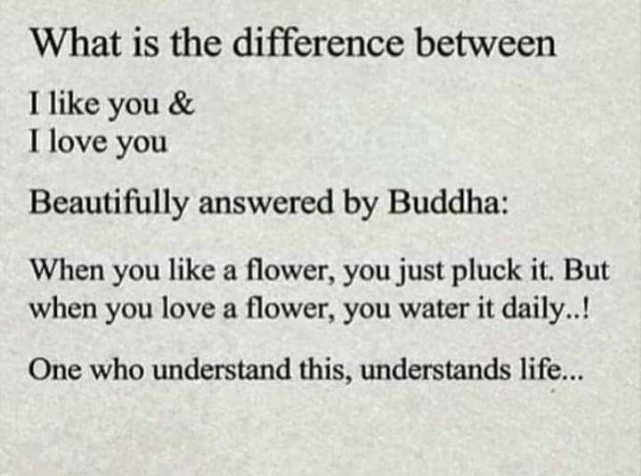 🖋 शेयरचैट Quotes - What is the difference between I like you & I love you Beautifully answered by Buddha : When you like a flower , you just pluck it . But when you love a flower , you water it daily . . ! One who understand this , understands life . . . - ShareChat