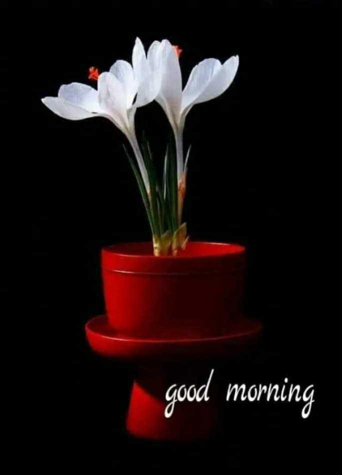 🕉 साई राम - good morning - ShareChat