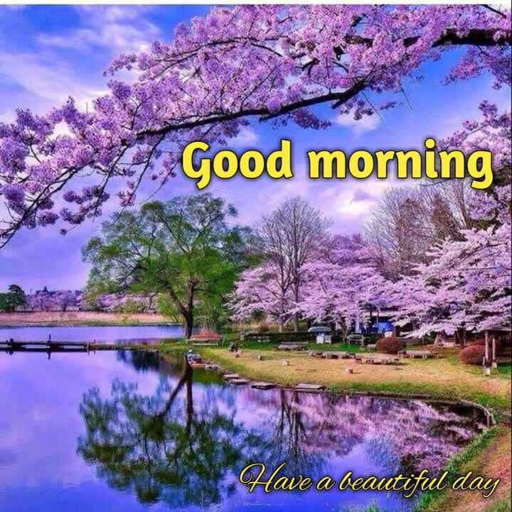 🌄सुप्रभात - Z . Good morning Have a beautiful day - ShareChat