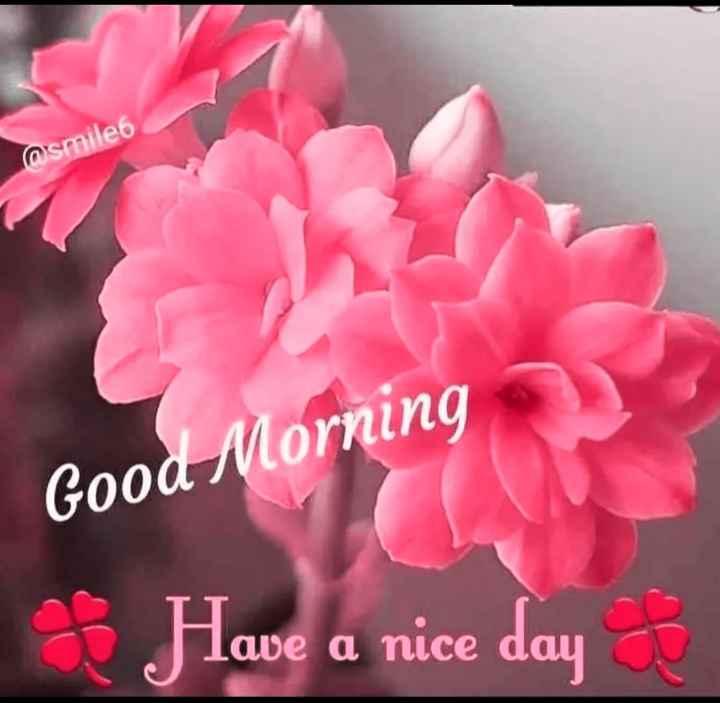 🌄सुप्रभात - osmile6 Good Morning Have a nice day - ShareChat
