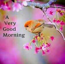 🤳 सेल्फी - Very Good Morning - ShareChat