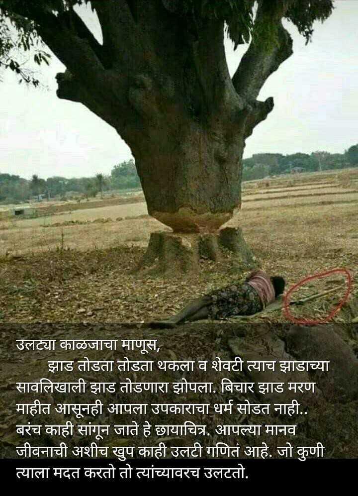 👌हृदयस्पर्शी फोटो - उलट्या काळजाचा माणूस , झाड तोडता तोडता थकला व शेवटी त्याच झाडाच्या सावलिखाली झाड तोडणारा झोपला . बिचार झाड मरण माहीत आसूनही आपला उपकाराचा धर्म सोडत नाही . . बरंच काही सांगून जाते हे छायाचित्र . आपल्या मानव जीवनाची अशीच खुप काही उलटी गणितं आहे . जो कुणी । त्याला मदत करतो तो त्यांच्यावरच उलटतो . - ShareChat