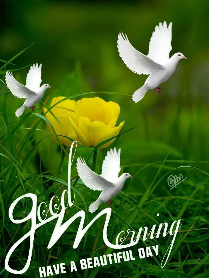 ☀ ঠাণ্ডাৰ ৰাতিপুৱা - Good m orning HAVE A BEAUTIFUL DAY - ShareChat