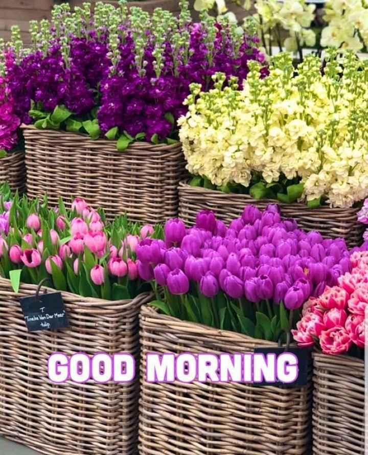 🛫ভ্রমণ - Van Der Meer GOOD MORNING - ShareChat