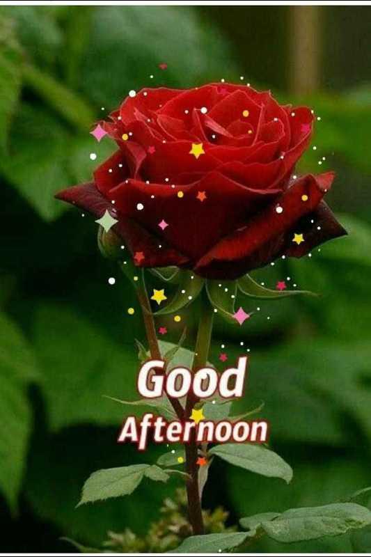 🌝শীতের দুপুর🌞 - Good Afternoon - ShareChat