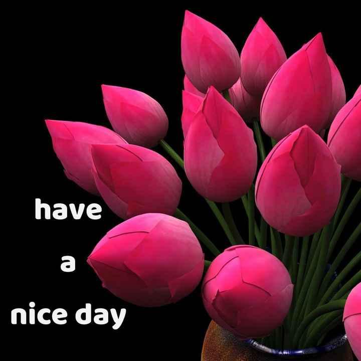 🙌শুভকামনা - have nice day - ShareChat