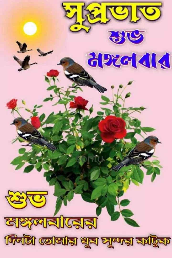 🙌শুভকামনা - জুতত মঙ্গলবার বারের দিনাই তেঞিাক্সি খুজুক্স ট্রি - ShareChat