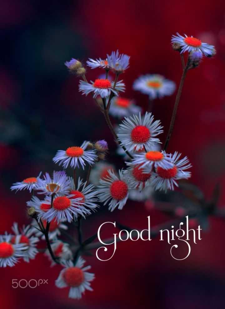 🌑শুভ রাত্রি - * Good night 500px - ShareChat